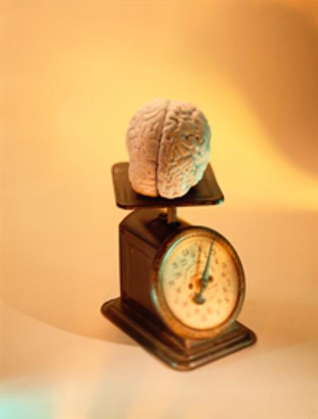 different-brain-size