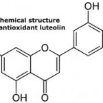 Is Antioxidant Luteolin an Anticancer Super-nutrient?