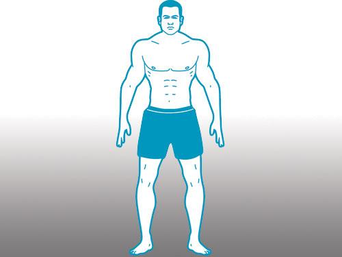 body type mesomorph