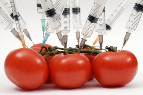 syringes-tomatoes
