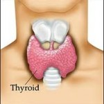 Can Homeopathy Help With Thyroid Issues?