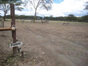 Zebra Parking