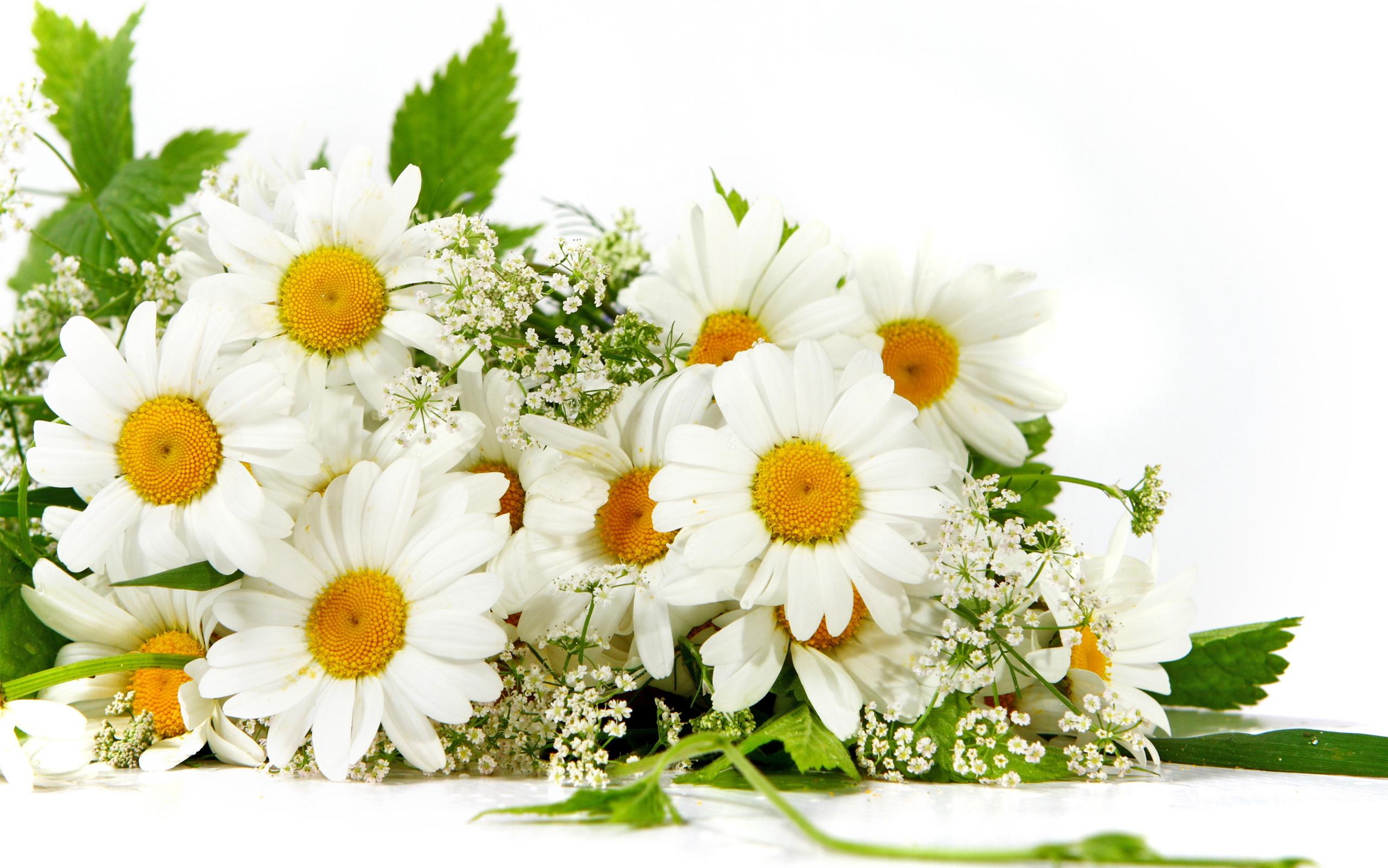 bouquet of daisy