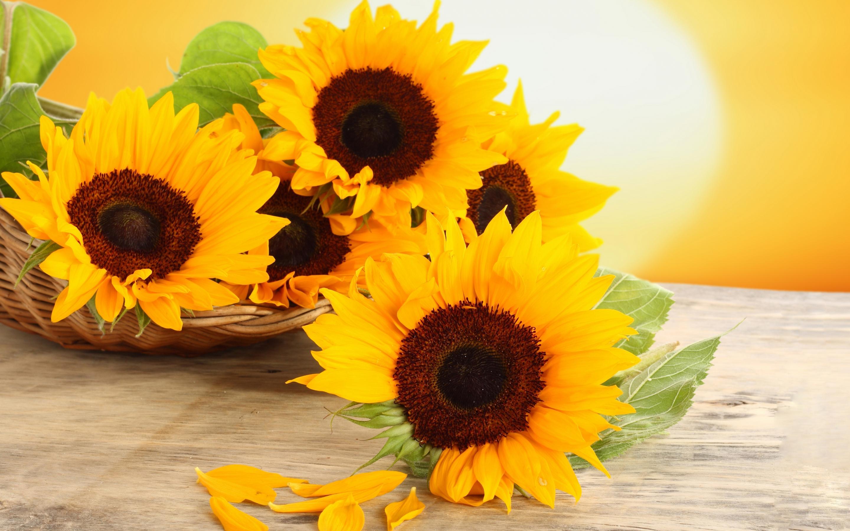 sunflowers arrangments