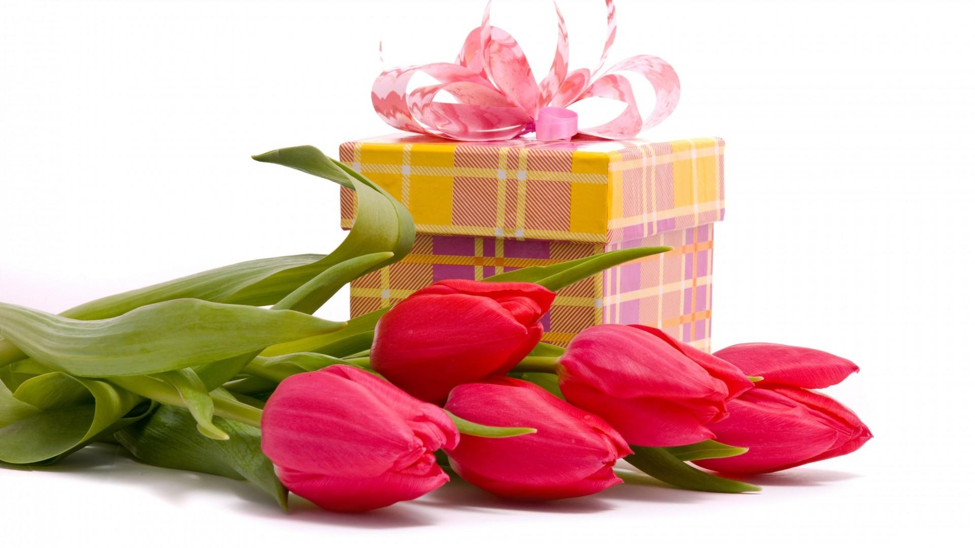 tulips gifts